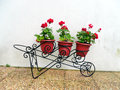 Group of geranium with flowers on flowerpots flowerpot a metallic container Royalty Free Stock Photo