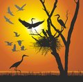 Group herons at sunset vector illustration nest in the dry tree Stock Photography