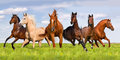 Group of horse run Royalty Free Stock Photo