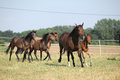 Group of horses with foal running on pasturage Royalty Free Stock Photography