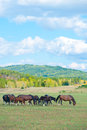 Group horses grazing green pasture Stock Photos