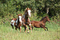 Group of horses running in freedom together Royalty Free Stock Photography