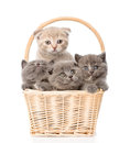 Group kittens in basket looking at camera. isolated on white Royalty Free Stock Photo