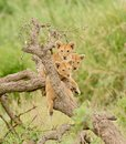 A group of lion cubs