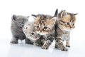 Group of little kittens Royalty Free Stock Photo