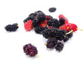Group of mulberries isolated Royalty Free Stock Photo