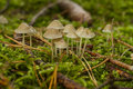 Group of mushrooms growing in green grass Stock Photos
