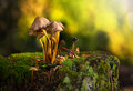 A group of mushrooms on a stub in sunlight during autumn Stock Images