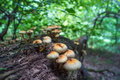Group of mushrooms Royalty Free Stock Photo