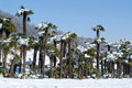 Group of palmtrees with snow on it at lugano switzerland Stock Photography