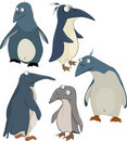 Group of penguins Royalty Free Stock Photos