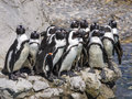 Group of penguins a mini zoo in santander spain Stock Photos