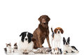 Group of pets dogs cats and rabbits isolated on white Stock Photos
