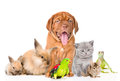 Group of pets together in front view. on white backgrou