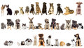 Group of pets on white background Stock Photography
