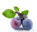 Group of plums with leaf isolated on white Royalty Free Stock Photo