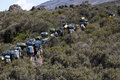 Group of porters kilimanjaro a passing through the moorland zone on rongai route with mawenzi looming in background Stock Photo