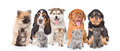 Group of purebred puppies and kittens.  on white background Royalty Free Stock Photo