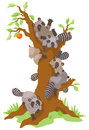 Group of raccoons dominating an old persimmon tree leafless create by vector Stock Photography