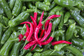 Group of red an gree fresh peppers Royalty Free Stock Photo