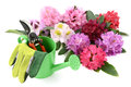 Group of rhododendron flowerheads with gardening utensiles tools like water can scissors and gloves Stock Images