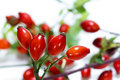 Group of rose hips on a white background. Royalty Free Stock Photo