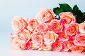 Group of rose isolated on white background Royalty Free Stock Images