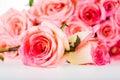Group of rose isolated on white background Stock Photo