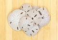 Group of sand dollars on wood slat surface a old atop a background Stock Photo