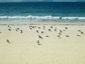 A group of seagull at the beach in vigo spain Stock Images