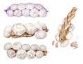 Group set of images heads of garlic. Royalty Free Stock Photos