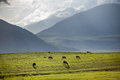 Group of sheeps pasturing in mountains kirghizia Stock Image