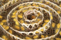 Group of silk worm cocoons Royalty Free Stock Photo
