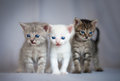 Group of small kittens weeks old Royalty Free Stock Photo