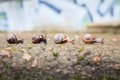 Group of small snails going forward in urban area Royalty Free Stock Photos