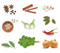Group of spices. Vector Royalty Free Stock Images