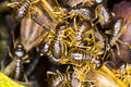 Group of termite via macro Royalty Free Stock Photos