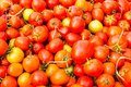 Group of tomatoes in thailand Royalty Free Stock Image