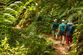 Group of trekkers hike through green jungle in sri lanka Stock Images