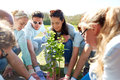Group of volunteers planting tree in park Royalty Free Stock Photo