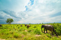 Group of wild elephants Royalty Free Stock Photo