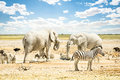 Group of wild mixed animals relaxing in Etosha Park Royalty Free Stock Photo
