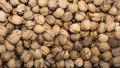 Grouped walnuts high resolution image Royalty Free Stock Photos