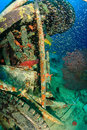 Grouper and glassfish around underwater wreckage other tropical fish a manmade piece of Stock Image