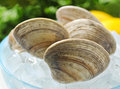 Grouping fresh clams shell ice Stock Photography