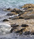 Groups of molluscs and mussels on the rocks by the sea with waves Royalty Free Stock Photography