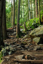 Grouse grind hiking trail Royalty Free Stock Photo