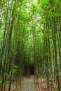 Groves of bamboo a quiet country lane in guiling Stock Photos