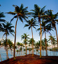 Groves palm trees shore light low sun Royalty Free Stock Photos