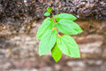 Grow plant on old brick Royalty Free Stock Images